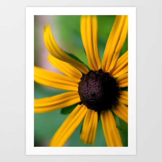 Yellow Susan Art Print
