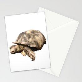 Sulcata Tortoise (grazing) Stationery Cards