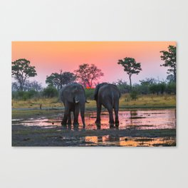 African Elephants At Sunset Canvas Print