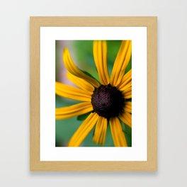 Yellow Susan Framed Art Print