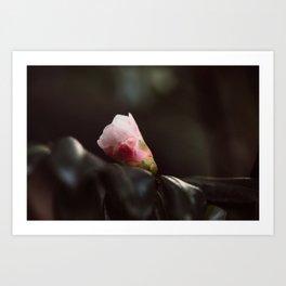 Portent of Bloom Art Print