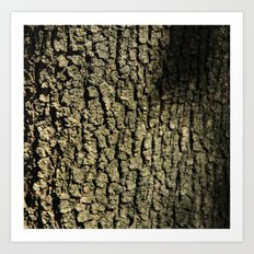 Barking Up the Right Tree Art Print