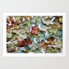 Hydrangea Petals no. 1 Art Print
