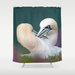 Northern Gannets (Morus bassanus) Shower Curtain