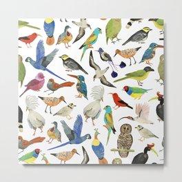 Endangered Birds Around the World Metal Print