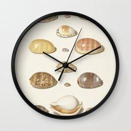 Vintage Seashell Chart I Wall Clock