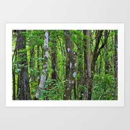 Swamp Song Art Print