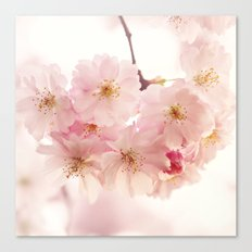 cherry blossoms- In memory Canvas Print