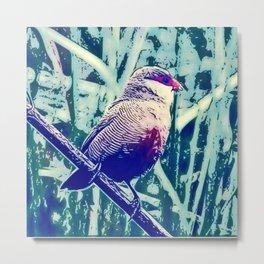 Bird Estrilda astrild Metal Print
