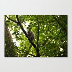 Peek a boo Squirrel Canvas Print
