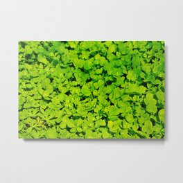 Green Clover Metal Print