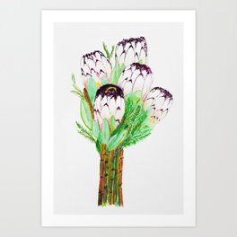 White protea, Australian Protea flower, tropical Art Print