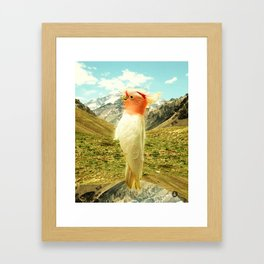 Parrot Mountain Framed Art Print