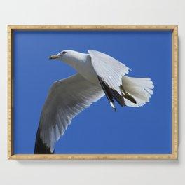 Ring-Billed Gull in Flight Serving Tray