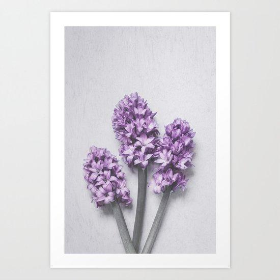 Three Light Purple Hyacinths Art Print