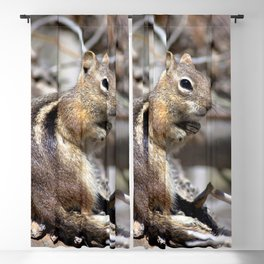 Watercolor Golden-Mantled Ground Squirrel 08, Welcome To The Forest Blackout Curtain