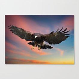 Harris Hawk in flight Canvas Print