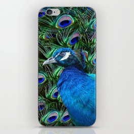 Blue Peacock and Feathers iPhone Skin