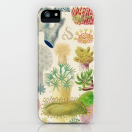 Great Barrier Reef Vintage Chart by William Saville-Kent, 1893 iPhone Case