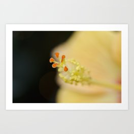 Hibiscus Up Close Art Print