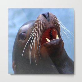 Micky The Wild Sea Lion Metal Print