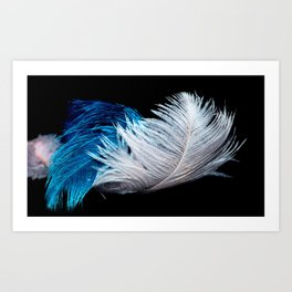 Blue and white feathers Art Print