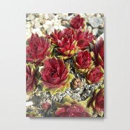 red cactus macro II Metal Print