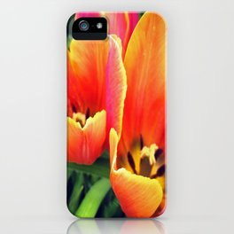 Coral Tulips in Bloom iPhone Case