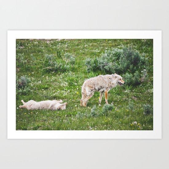 Coyotes Couples Art Print