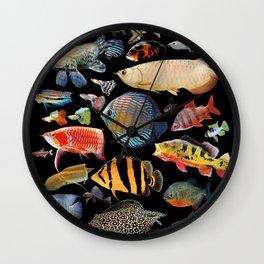 Freshwater tropical fish Wall Clock
