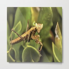 Praying Mantis On Green Garden Background Metal Print