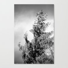 The Tree in the Wind Canvas Print