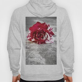 Variegated Rose on Concrete Hoody