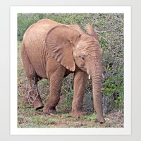 baby elephant Art Prints featuring Baby Elephant by Lynn Bolt