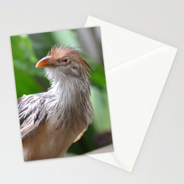 guira cuckoo Stationery Cards