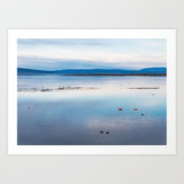 Flamingoes on El Calafate, Patagonia, Argentina Art Print