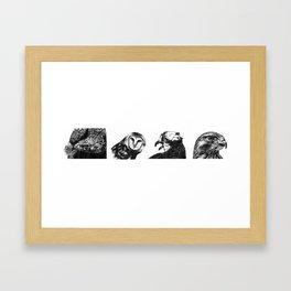 Birds of Prey Framed Art Print