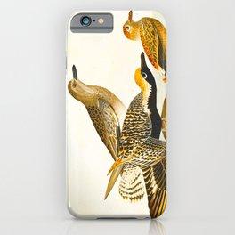 Black-bellied Plover Bird iPhone Case