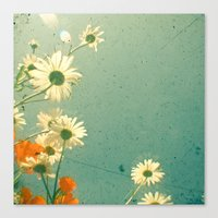 daisy Canvas Prints featuring Daisy by Cassia Beck
