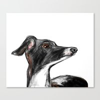 italian Canvas Prints featuring Italian Greyhound by James Peart