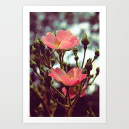 my mother says these are buttercups. Art Print