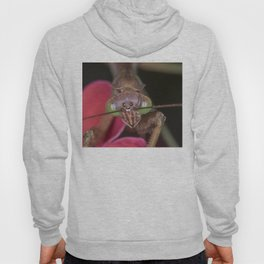 Praying Mantis close up Hoody