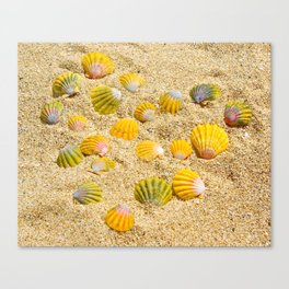 Sunrise Shells Canvas Print