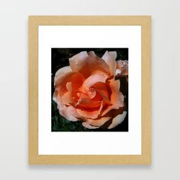 Peach Sunshine Framed Art Print