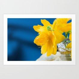 Yellow Globeflower - Golden Queen Trollius x Cultorum 4 Art Print