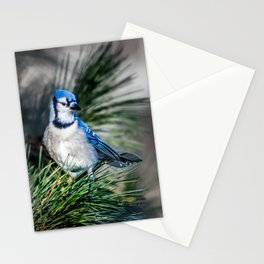 Bright BlueJay Stationery Cards
