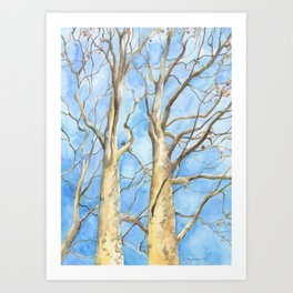 Two Sycamore Trees Art Print