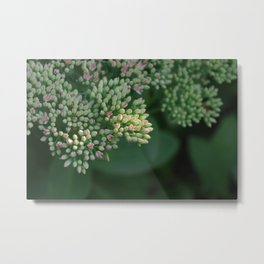 If you were in bloom... Metal Print