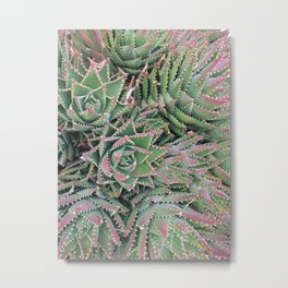 Tiger-Tooth Aloe Metal Print