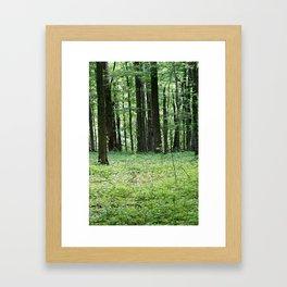 Woodlands Framed Art Print
